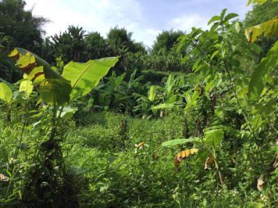 ที่ดิน 800000 เชียงใหม่ แม่แตง สันป่ายาง