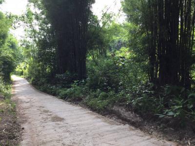 ที่ดิน 950000 เชียงใหม่ แม่แตง สันป่ายาง