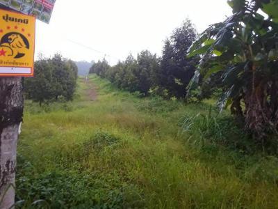 ไร่สวน 19200000 จันทบุรี มะขาม ท่าหลวง