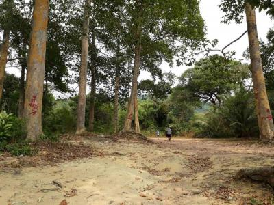 ที่ดิน 260000000 จันทบุรี แหลมสิงห์ บางกะไชย