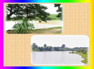 ที่ดิน 1110000 กาญจนบุรี เมืองกาญจนบุรี เกาะสำโรง