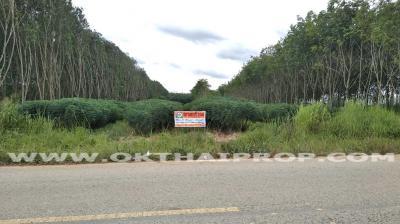 ที่ดิน 10000000 ชลบุรี หนองใหญ่ หนองเสือช้าง