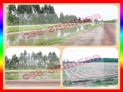 ที่ดิน 280000 กาญจนบุรี พนมทวน รางหวาย