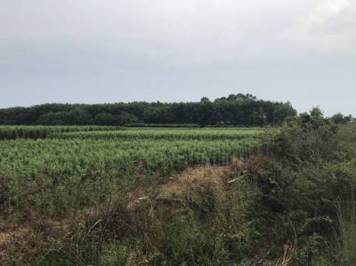 ที่ดิน 0 ปราจีนบุรี เมืองปราจีนบุรี ดงขี้เหล็ก