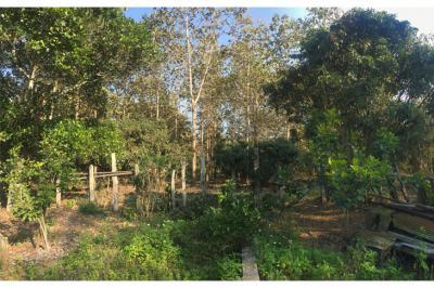ที่ดิน 9500000 เชียงราย กิ่งอำเภอเวียงเชียงรุ้ง ป่าซาง