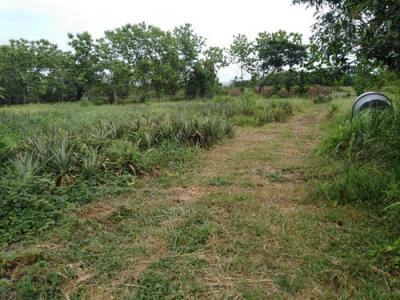 ที่ดิน 4540625 ลำปาง เมืองลำปาง บ้านเสด็จ