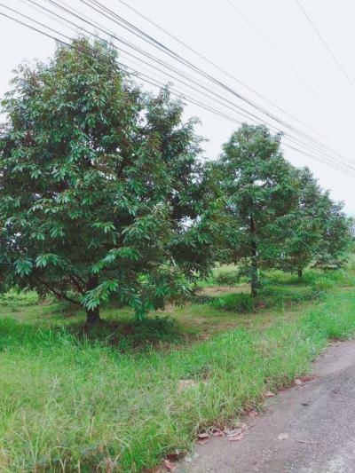 ไร่สวน 7000000 จันทบุรี ขลุง ตกพรม
