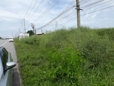 ที่ดิน 0 กรุงเทพมหานคร เขตหนองจอก ลำต้อยติ่ง