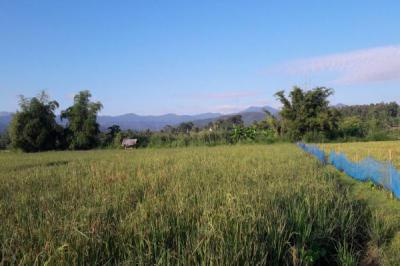 ที่ดิน 1903650 เชียงใหม่ แม่แตง สันป่ายาง