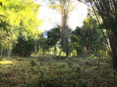 ที่ดิน 900000 เชียงใหม่ แม่แตง สันป่ายาง
