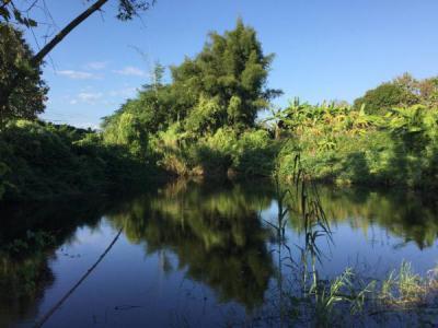 ที่ดิน 3500000 เชียงใหม่ แม่แตง สันป่ายาง