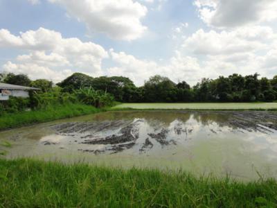 ที่ดิน 16000000 กรุงเทพมหานคร เขตคันนายาว คันนายาว