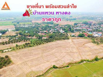 ที่ดิน 23558400 เชียงใหม่ หางดง บ้านแหวน