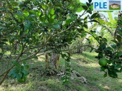 ไร่สวน 1500000 กาญจนบุรี เมืองกาญจนบุรี หนองบัว