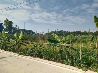ที่ดิน 8000000 ปทุมธานี ธัญบุรี ลำผักกูด