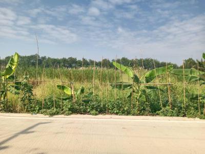 ที่ดิน 2000000 ปทุมธานี ธัญบุรี ลำผักกูด