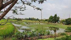 ที่ดิน 8500000 นนทบุรี บางใหญ่ เสาธงหิน