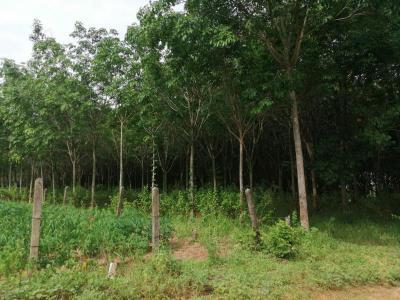 ไร่สวน 817500 ขอนแก่น เมืองขอนแก่น ดอนช้าง